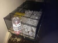 Dwarf hamster, cage good& bedding. 8 months old