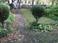 Garden Maintenance/winter clear ups