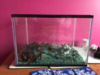 Fish tank for sale - includes plug in filter, ornament, plastic plant and gravel