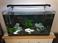 Tropical Fish Tank - 130lt with Light and Filter