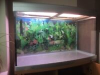 176 LITER TROPICAL/MARINE AQUARIUM/ FISH TANK/ PETS