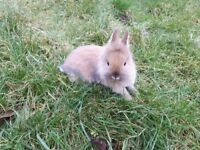 SOLD... nice baby rabbit