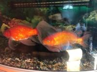 Fish tank with four free fish!!