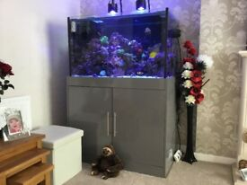 Marine full set up fish tank