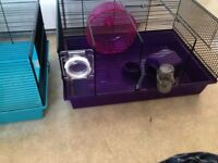 Two hamsters cages
