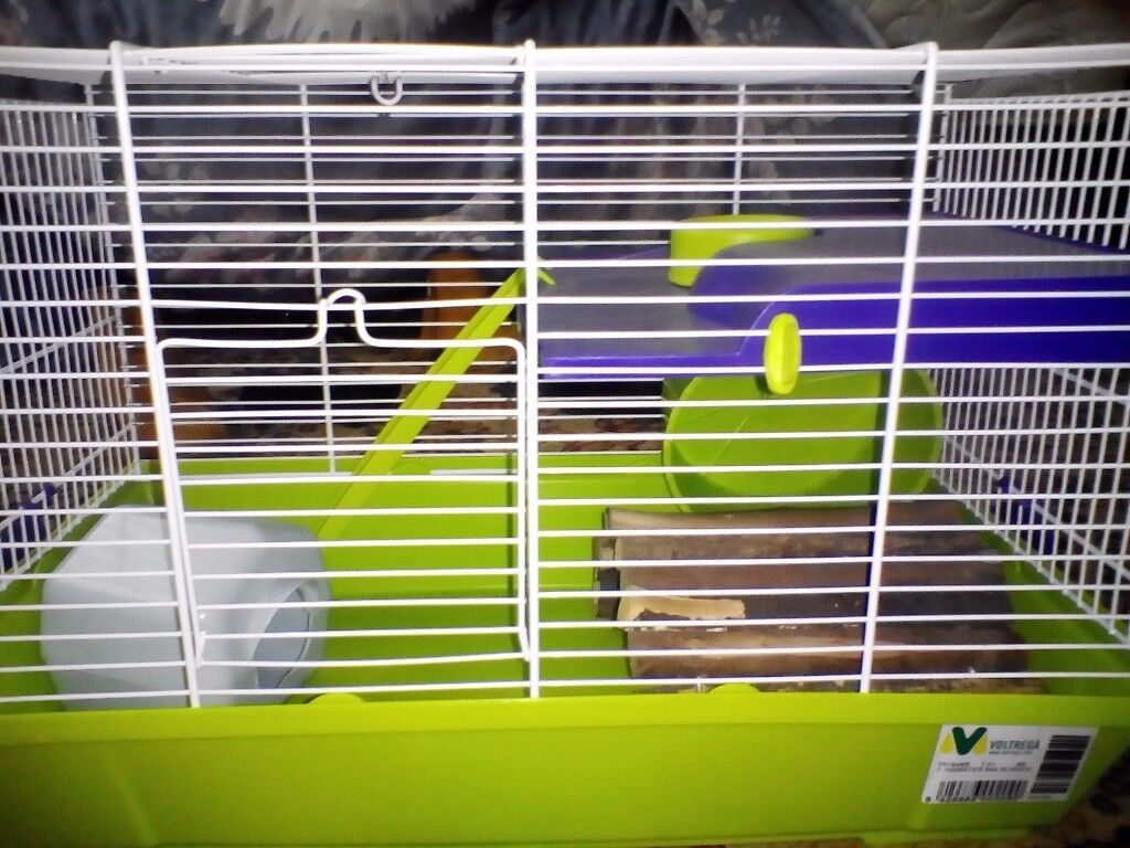 Very clean hamster cage