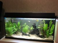 125L Tropical Fish Tank