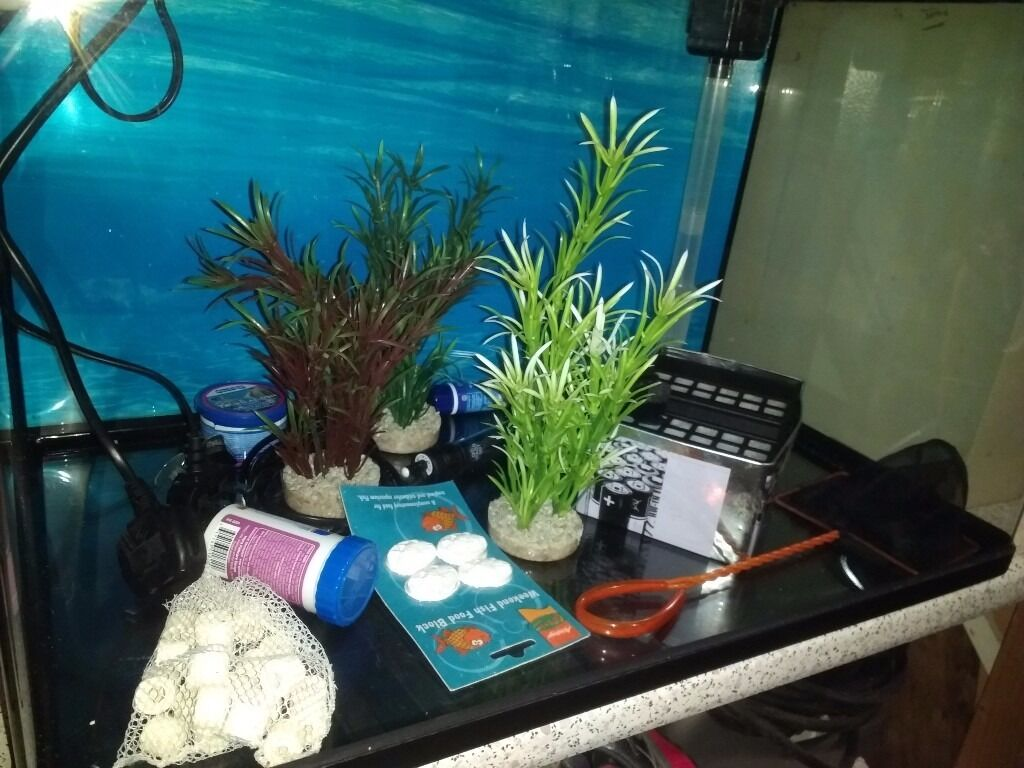 Ugly freshwater aquarium fish - Fish Tank Glass 100 Ltr Panoramic Views No Ugly Frame
