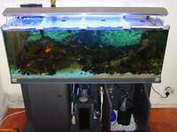 FISH TANK/AQUARIUM CLEANER FOR HIRE