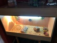Female Leopard Gecko and set up