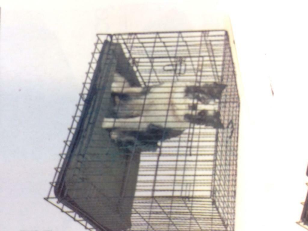 Dog's training pan/ cage for sal