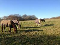 Horse Grazing fields from £15pw/ph