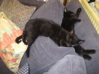 Black kittens,friendly and nice.