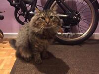 Lost Cat Homerton E5 london