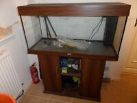 juwel rio 180 litre fish tank aquarium full set up £150