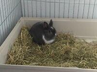 Baby Male Rabbit