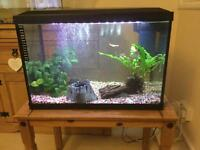 2ft fish tank with accessories