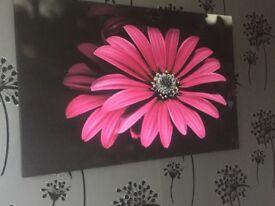 Pink flower canvas picture excellent condition