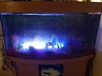240 litre jewel fish tank