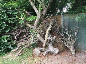 Free Fire Wood Tree Trunks