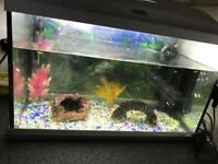 Baby fish and tank