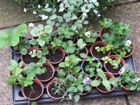 Assorted Vegetables Plants (see list enclosed) Pots all at 50p each lots of variety!