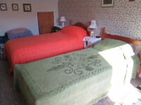 2 single beds for sale. 1 pine without mattress, 1 divan with mattress, very good condition