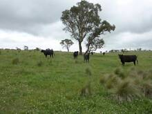 Outstanding small New England Income Producer Wollomombi Armidale City Preview