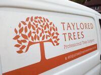 Taylored Trees tree surgery