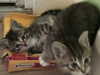 Very nice kittens looking for a new home.