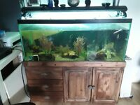 REDUCED!!!!! Tropical fish tank full setup inc. Fish
