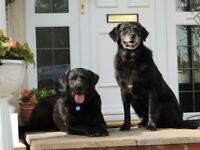 DORSET DOG AND HOUSEWATCH PET SITTING SERVICE