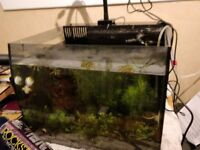 Fluval Flex Fish Tank and kessil co2