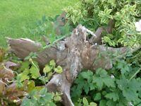 Architectural Ornament for Garden/Patio - Tree Stump
