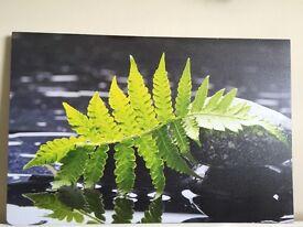 2 x Rainforest canvas print