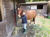 Retirement home for horses