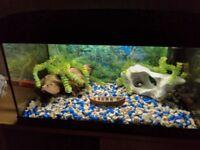 2ft fish tank 56 litres