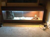 Reptile vivarium set up 4ft
