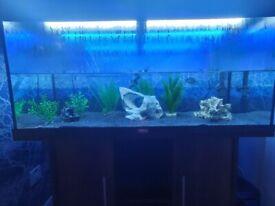 Jewel rio 180 aquarium