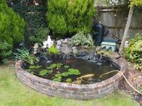 Pond cleaning, maintenance