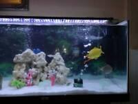 Tropical fish tank.