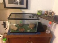 Tank(s) and reptile (gecko) accessories for sale