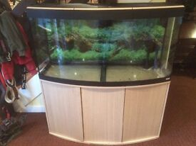 Fluval vecenza 260 bow front