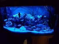 Juwell 180 vision aquarium