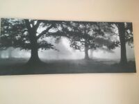 Meadow dream canvas