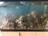 Rock for marine aquarium 15kg