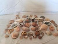 Seashells from Sussex selection