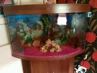 4 foot corner tank for sale