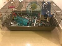 3 baby rats 😊