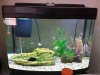 FISHTANK!! £250+spent ☆BARGAIN☆